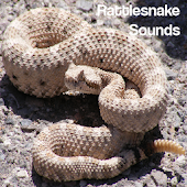 Rattlesnake Sounds