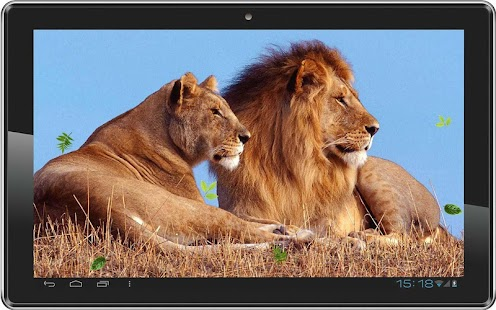 Lions Wild HD live wallpaper