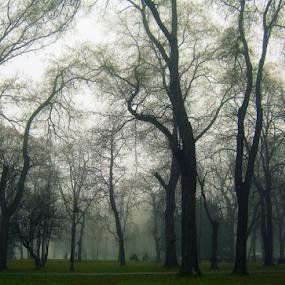 by Tatjana Koljensic - City,  Street & Park  Amusement Parks