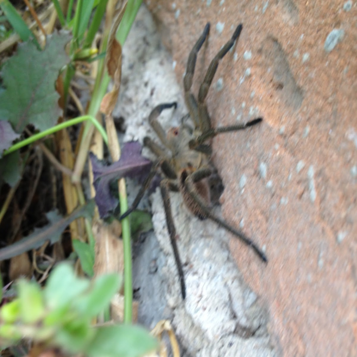 Possibly a wolf spider