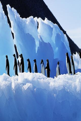 Antarctica Wallpapers HD