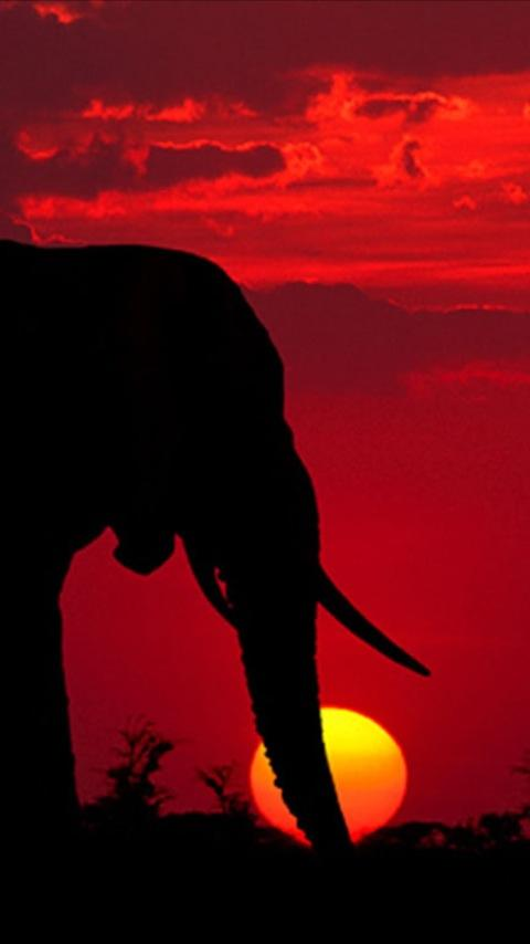 Elephant Wallpapers Android Apps on Google Play