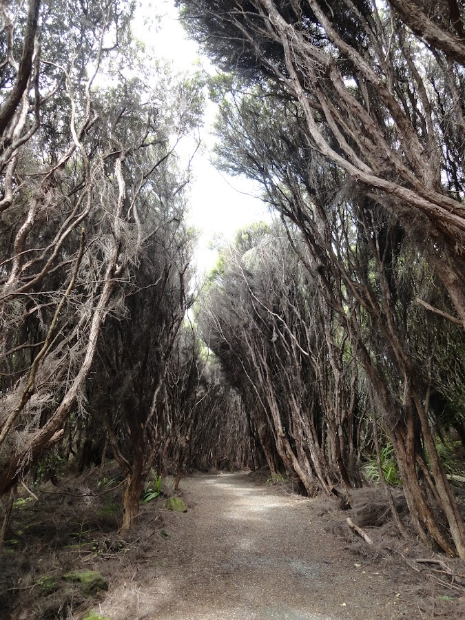 Omaui Track by Marion Metz - Nature Up Close Trees & Bushes ( omaui, walking, track, trees, bush, beach, new zealand, coast )