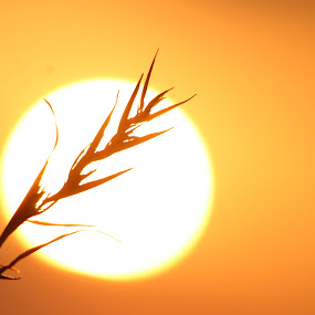 by Kevin Navis - Nature Up Close Other Natural Objects ( silhouette )