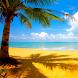 Palm Tree Tropical Beach LWP