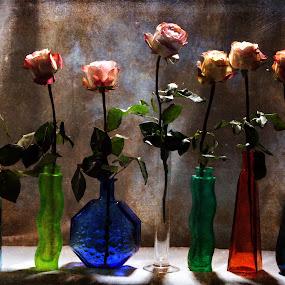 Before the Curtain Falls by Randi Grace Nilsberg - Flowers Flower Arangements ( textures, theatre, holidays, summer, show, cut, stem, curtain, Flowers, Flower Arrangements )