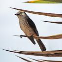 Vermillon Flycatcher