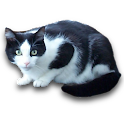 vCat logo