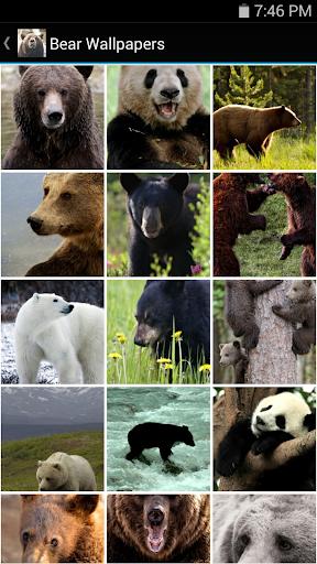 Bear Wallpapers