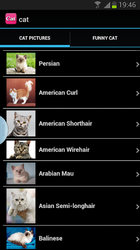 Cat apps for cats