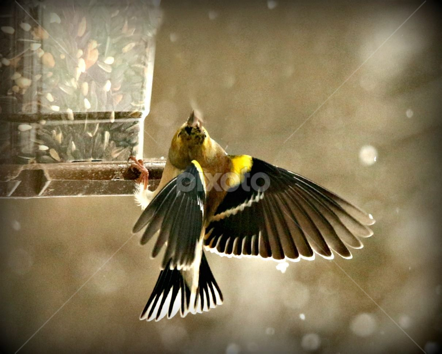 by Laurie Bird - Animals Birds