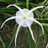 White Tendril Flower