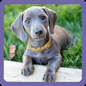 Cute Dog Sliding Puzzle