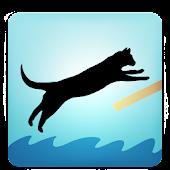 Zippy Cat