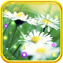 Camomile Summer live wallpaper icon