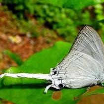 ButterflyIndia