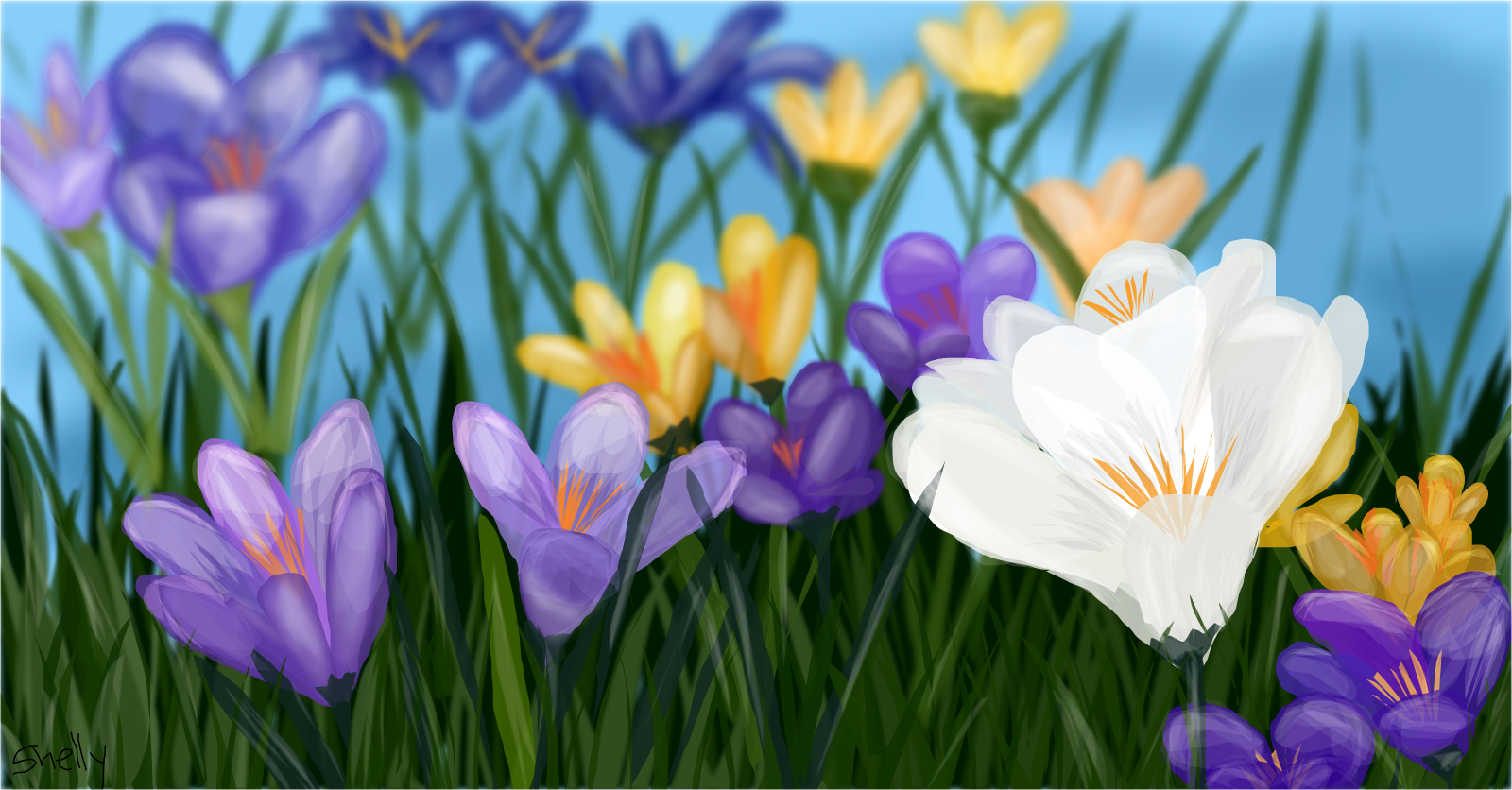 First Flower Of Spring Drawings Sketchport