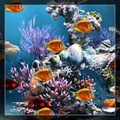 Create Fish Live Wallpaper
