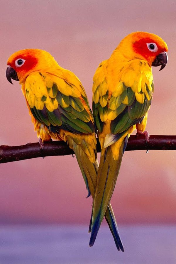 birds wallpaper - android apps on google play