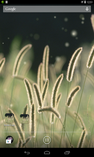 zz[Unpublish]Bristle Grass