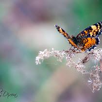 Butterflies & Moths of Texas
