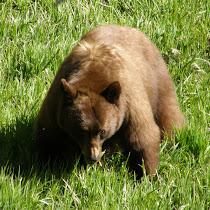 Wildlife of Yosemite National Park