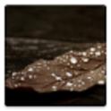 Wallpaper Randomizer icon
