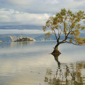 Lake Wanaka, New Zealand by Lee Davenport - Landscapes Waterscapes (  )