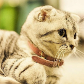 3D Kitty HD Live Wallpaper