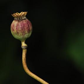 by Delphine Jourdren - Nature Up Close Gardens & Produce