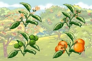 Screenshot of Фрукты - книга детям
