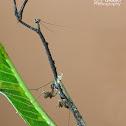 Stick mantis