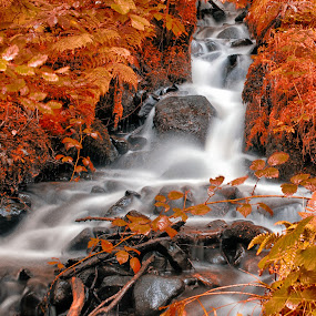 Autumn Falls by David Harris - Landscapes Forests ( water, orange, stream, green, waterfall, forest, yellow, leaves, red, magical, enchanted, trees, busges, surreal, stones, rocks, branches, river )