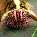 Yellow hairy caterpillar