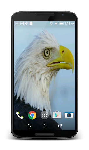 USA Eagle Live Wallpaper  screenshots 2
