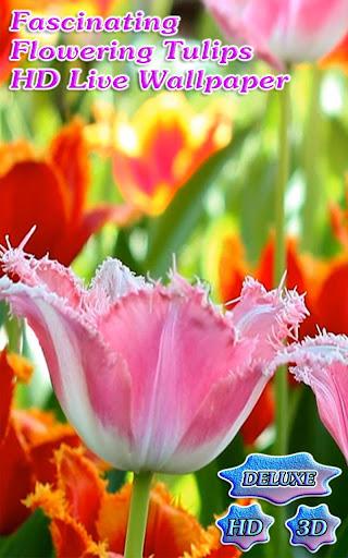 Fascinating Flowering Tulips