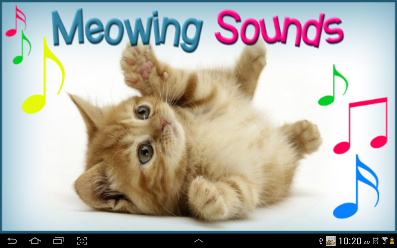 100 cats meowing audio