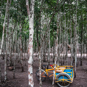 Mayan Taxi in Coba by Christian Diboky - Transportation Bicycles ( taxi, bicyle, mexico, green, coba, forest, transportation, yellow, mayan taxi, blue, brown, yucatan, quintana roo,  )