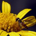 beeez~Hover Flies