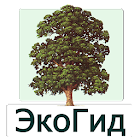 EcoGuide: Trees in Summer icon