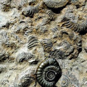 Signs of life by Ste D - Nature Up Close Rock & Stone ( spirals, texture, stone, gold, fossils,  )