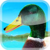 Ducks 3D Live Wallpaper FULL