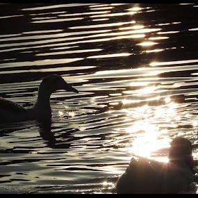 by Michelle Cutt - Animals Birds