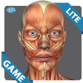 Muscular Anatomy Game Lite