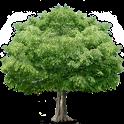 진새골온누리교회 icon