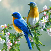 Singing Birds Live Wallapaper