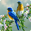 Singing Birds Live Wallapaper 1.7 APK for Android
