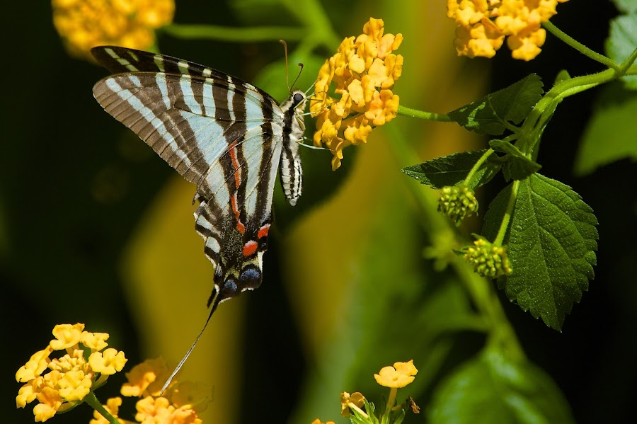 Looking Up by Roy Walter - Animals Insects & Spiders ( butterfly, animals, nature, insects )