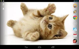 Screenshot of Playful ginger kitten