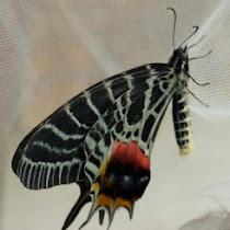 Butterfly and Moths of Bhutan